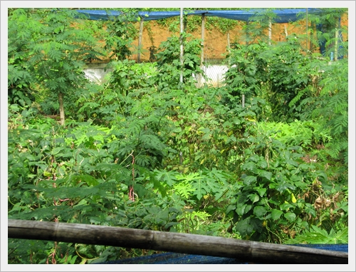 การปลูกพืชผสมผสานไร้สารพิษระบบใต้ดิน ศูนย์เรียนรู้เศรษฐกิจพอเพียงบ้านเขากลม