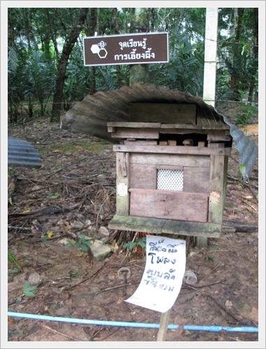การเลี้ยงผึ้ง ศูนย์เรียนรู้เศรษฐกิจพอเพียงบ้านเขากลม