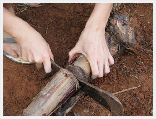 การปลูกพืชตีกลับ พืชกลับหัว กล้วยกลับหัว กล้วยไข่