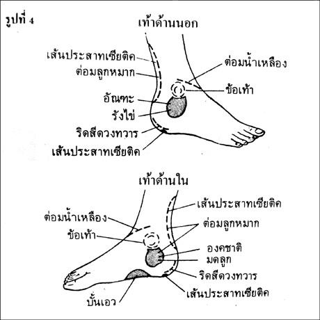 นวดฝ่าเท้ารักษาโรค